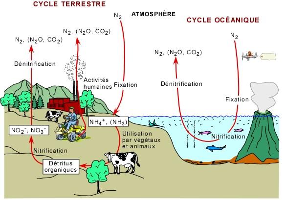 dioxygène définition svt