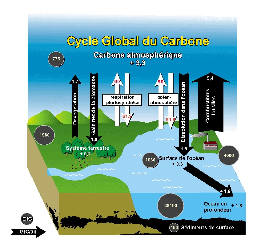 Cycle du Carbonne
